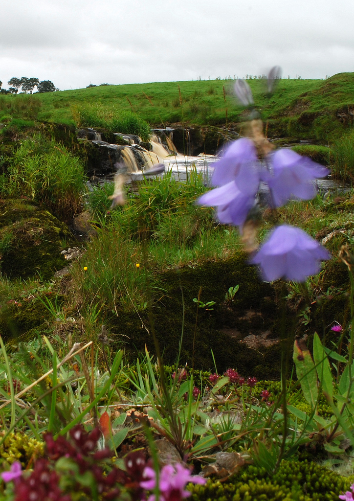 Blue Bells The Avon Linn by James B Brown