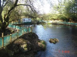 Large Rearing Pond