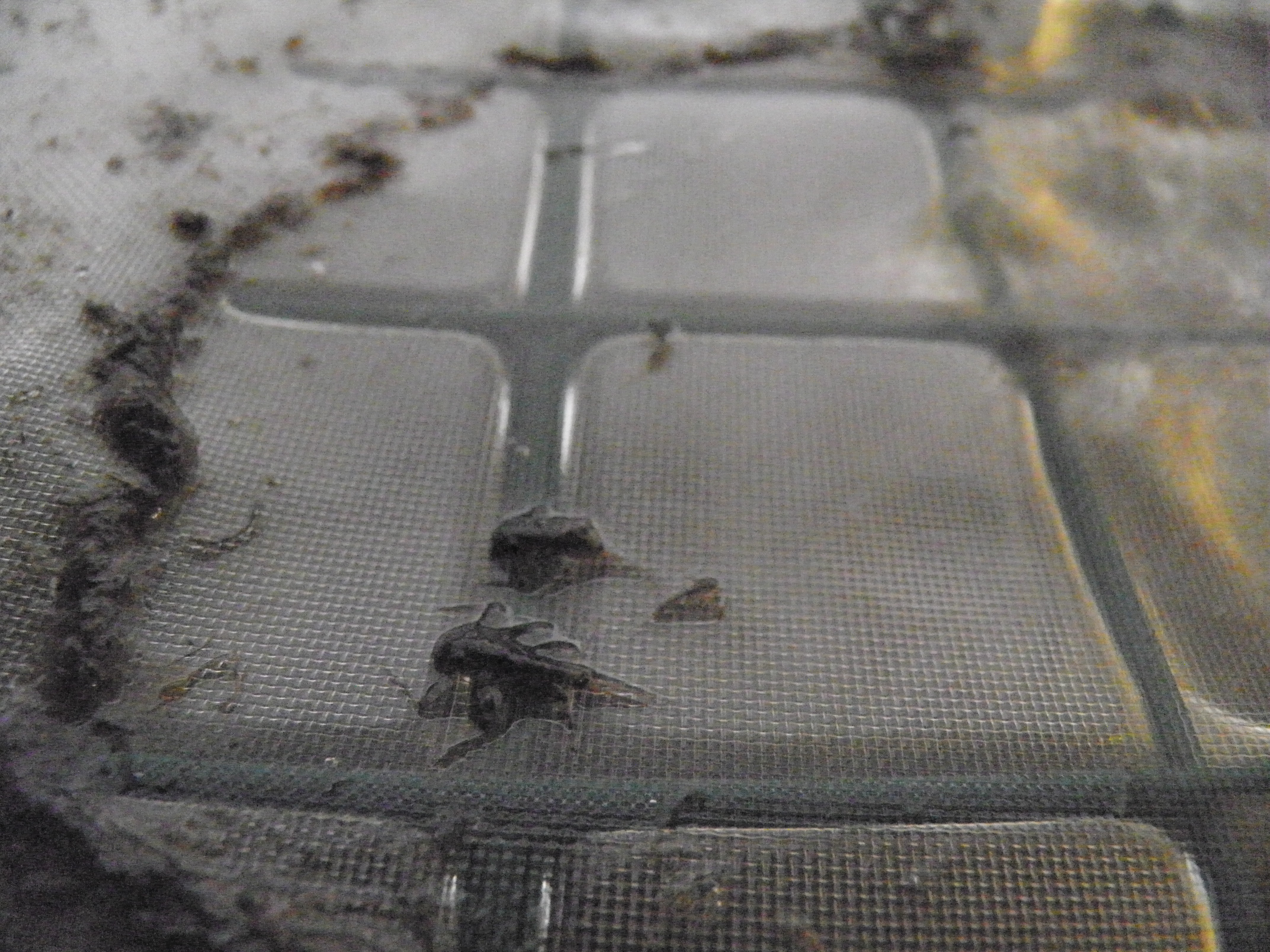 Fly Life In The Hatchery Filter