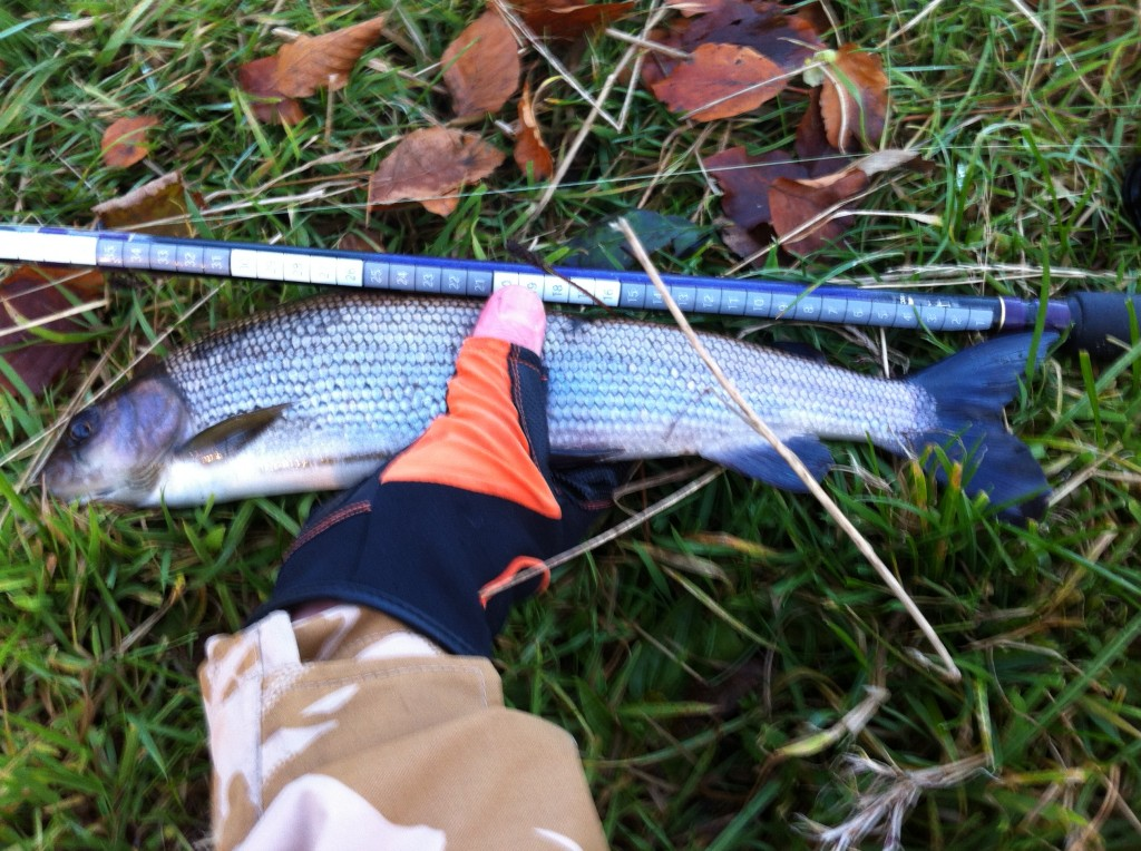 First 40cm UAAA Grayling of the day.