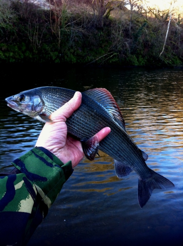 The Beauty of a Grayling - well done Alan T & great photo Stan :-D