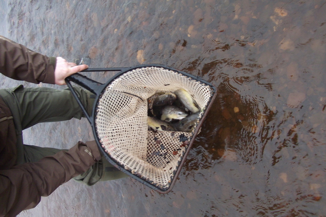 UAAA Trout Stocking into the Avon March 2015 a