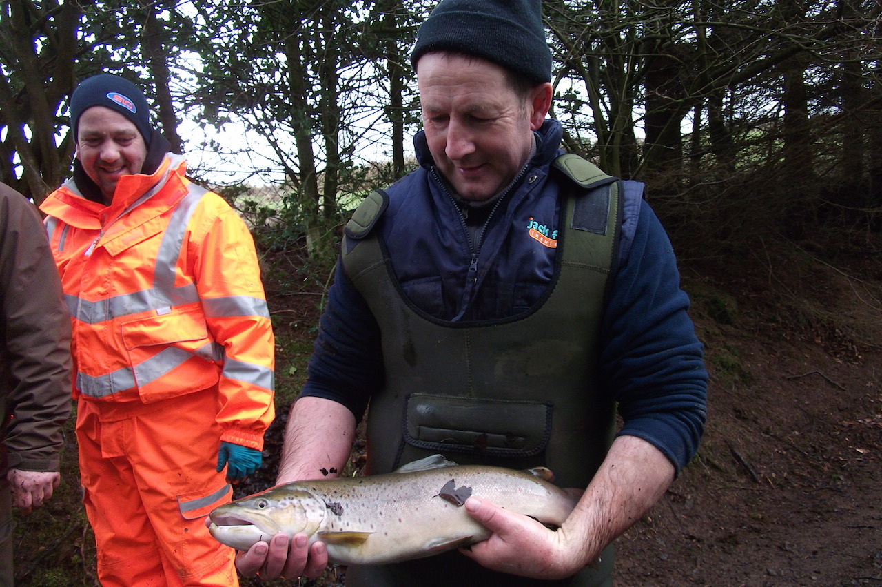 Large Trout ready for stocking into the Avon March 2015