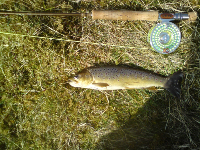 1lb Wild Brownie caught & returned recently by Stan Broom