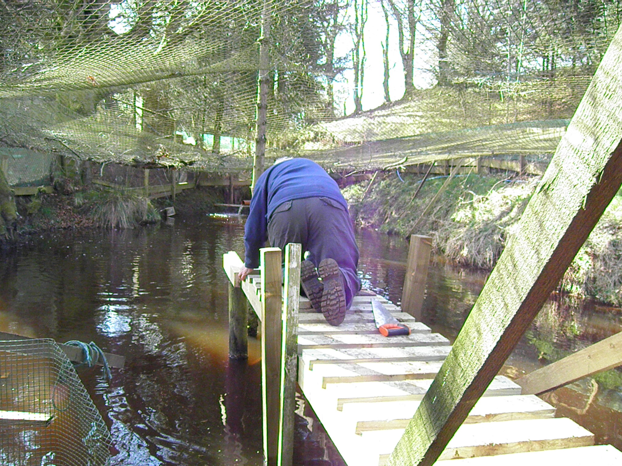 Jim working hard building a walkway in the 2 year pond.